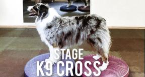 Evento: Stage di K9 Canine Cross Training